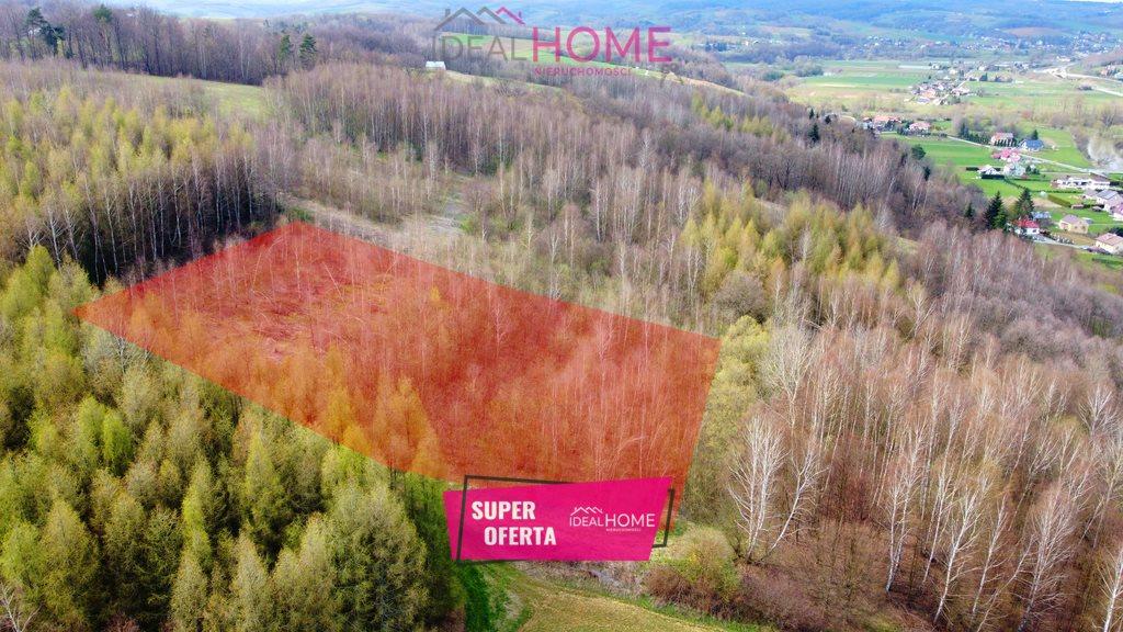Działka leśna na sprzedaż Zaborów  6300m2 Foto 1