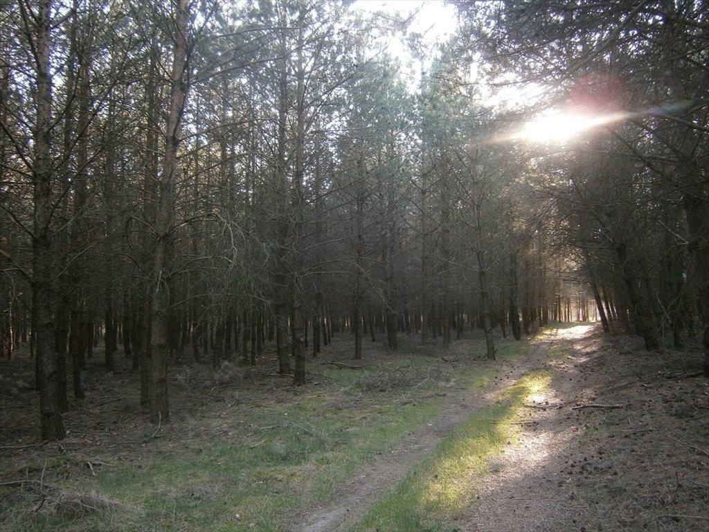 Działka leśna na sprzedaż Stara Wiśniewka  55661m2 Foto 2