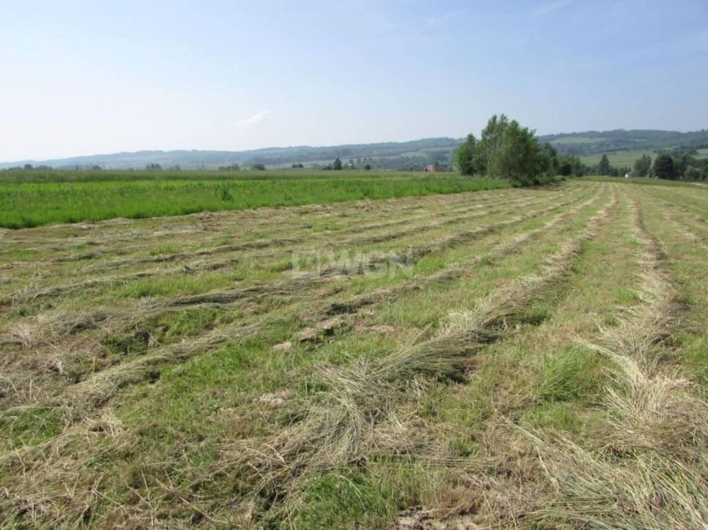 Działka rolna na sprzedaż Harta, Harta, Harta  2411m2 Foto 5