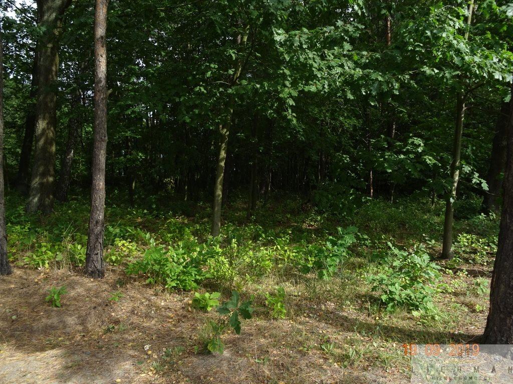 Działka leśna z prawem budowy na sprzedaż Justynów  2054m2 Foto 1