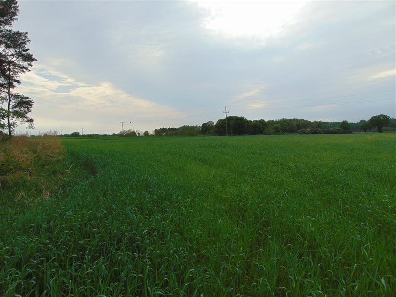 Działka rolna na sprzedaż Kępa Mała  15000m2 Foto 10