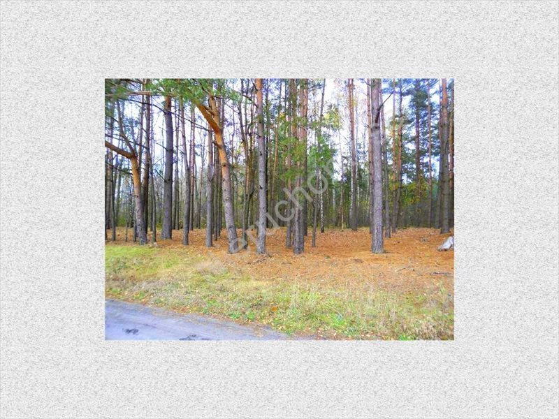 Działka leśna na sprzedaż Wólka Wybraniecka  12500m2 Foto 1