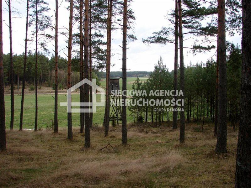 Działka leśna na sprzedaż Małe Chełmy  165900m2 Foto 1