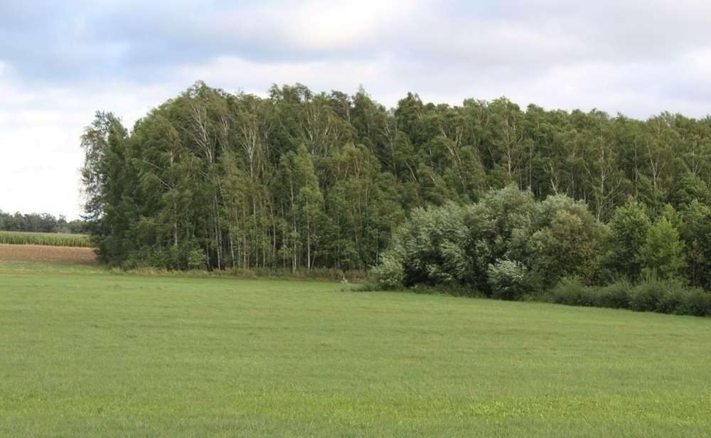 Działka rolna na sprzedaż Malesze  164100m2 Foto 8