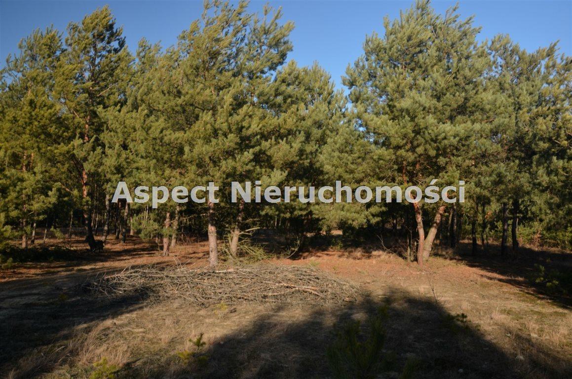 Działka leśna na sprzedaż Suchcice  12200m2 Foto 3