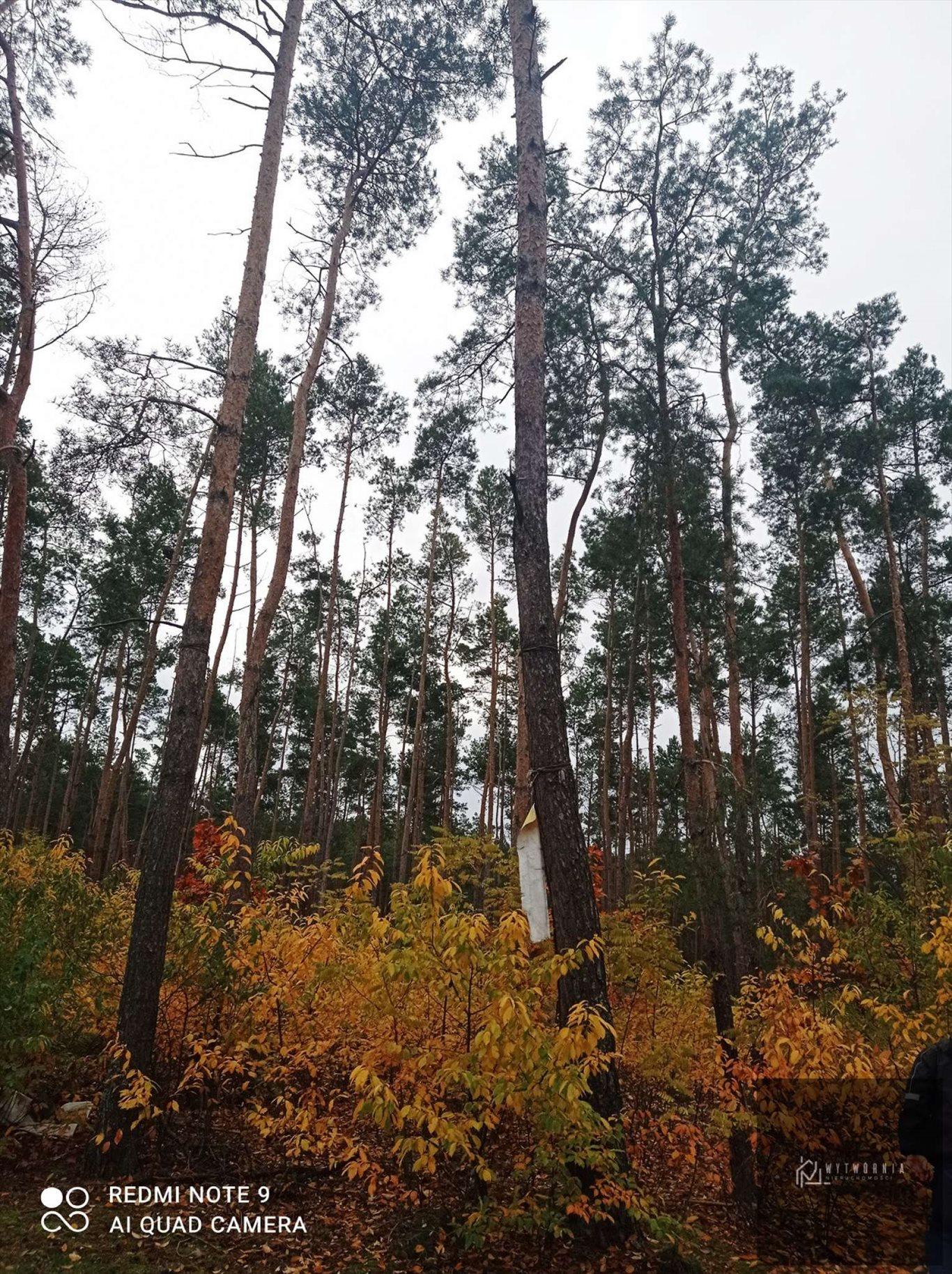 Działka leśna na sprzedaż Leśnik  1980m2 Foto 1