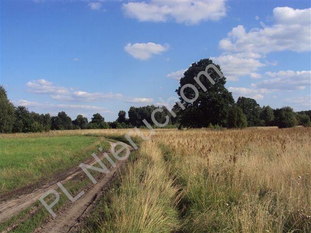 Działka rolna na sprzedaż Holendry Baranowskie  8300m2 Foto 2