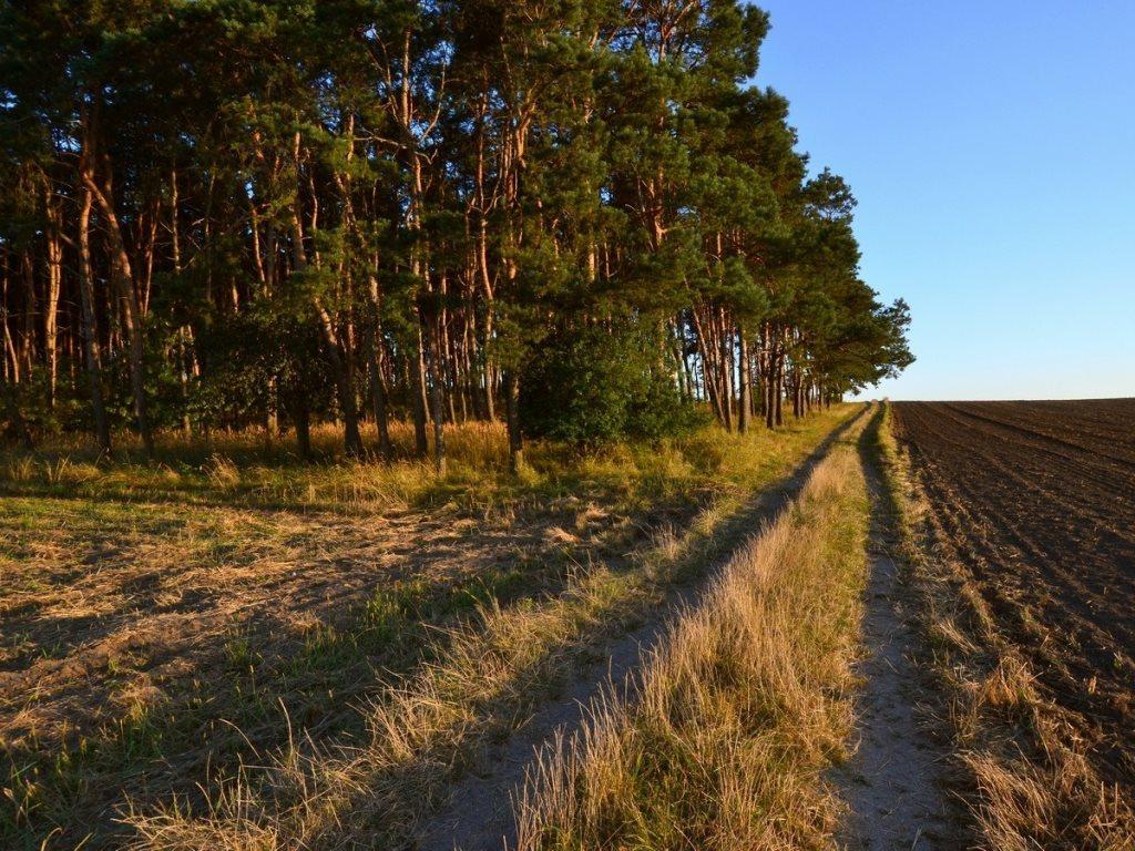 Działka leśna na sprzedaż Gogolin, Wygoda  25540m2 Foto 9
