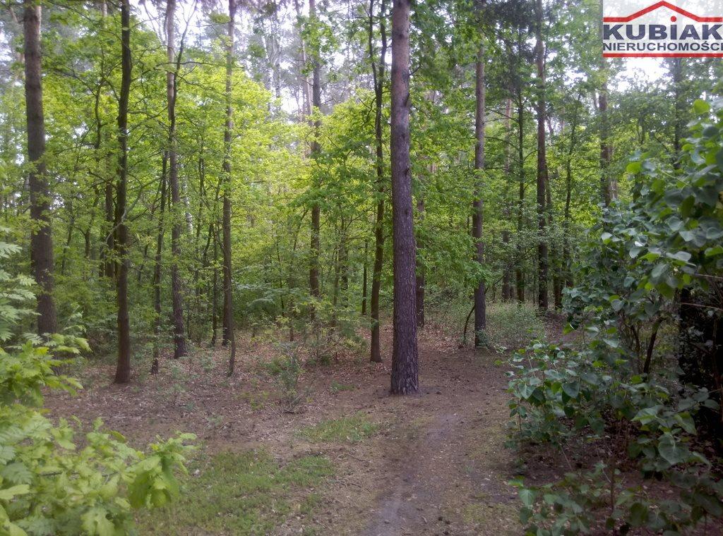 Działka leśna na sprzedaż Powązki  3600m2 Foto 2