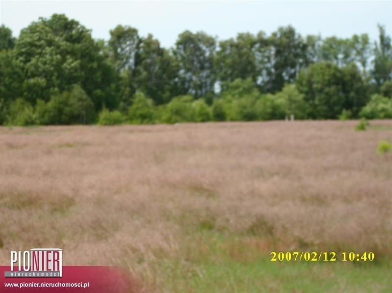 Działka rolna na sprzedaż Rurzyca  1368m2 Foto 3