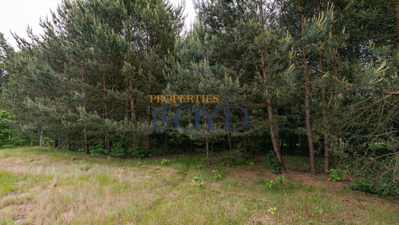 Działka rolna na sprzedaż Kociołki, Kociołki  3229m2 Foto 4