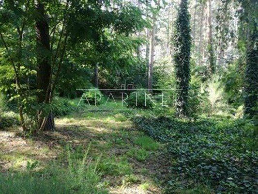 Działka leśna na sprzedaż Przyrownica  41645m2 Foto 1
