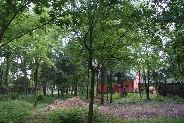 Działka leśna z prawem budowy na sprzedaż Łódź, Widzew, Dworcowa  1836m2 Foto 4