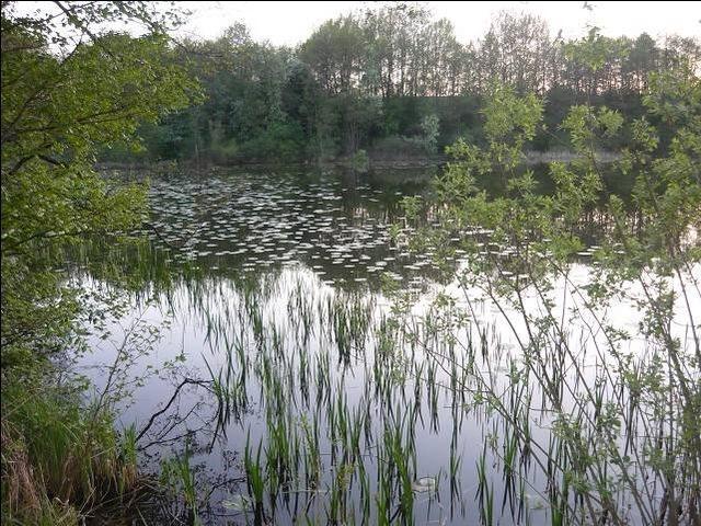 Działka rolna na sprzedaż Bieniasze, Wieś Nad Jez. Bieniaskim, Bieniasze  14800m2 Foto 4