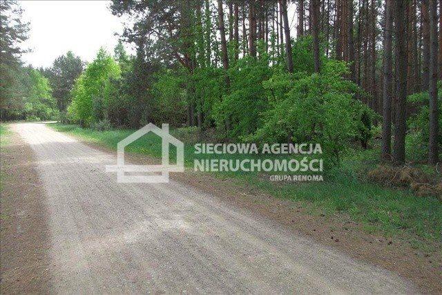 Działka leśna na sprzedaż Czarniż  44100m2 Foto 5