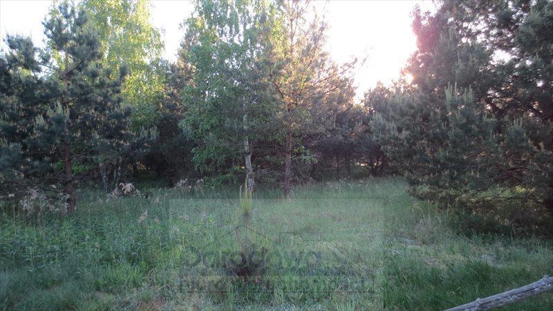 Działka siedliskowa na sprzedaż Łomna  10725m2 Foto 2
