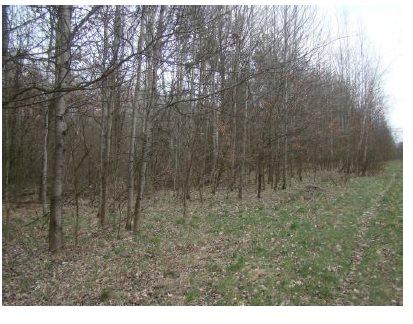 Działka leśna na sprzedaż Myszków, Będusz  3104m2 Foto 2