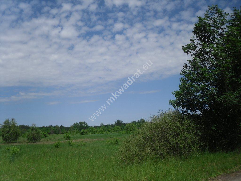 Działka siedliskowa na sprzedaż Sowia Wola  15000m2 Foto 1