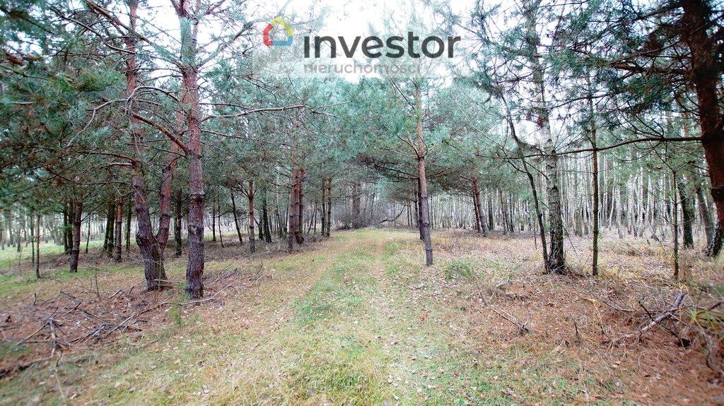 Działka leśna z prawem budowy na sprzedaż Bukowa Wielka  39157m2 Foto 10