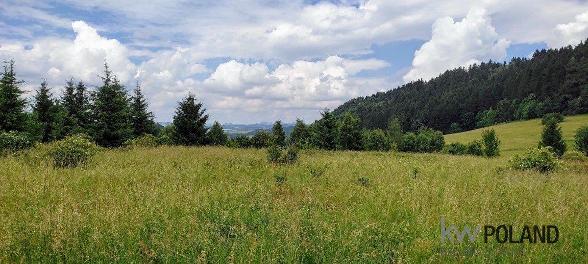 Działka rolna na sprzedaż Kudowa-Zdrój, Pstrążna  7358m2 Foto 6