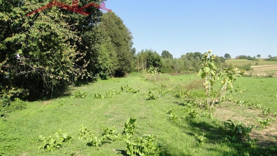 Działka rolna na sprzedaż Brzozów  1000m2 Foto 1