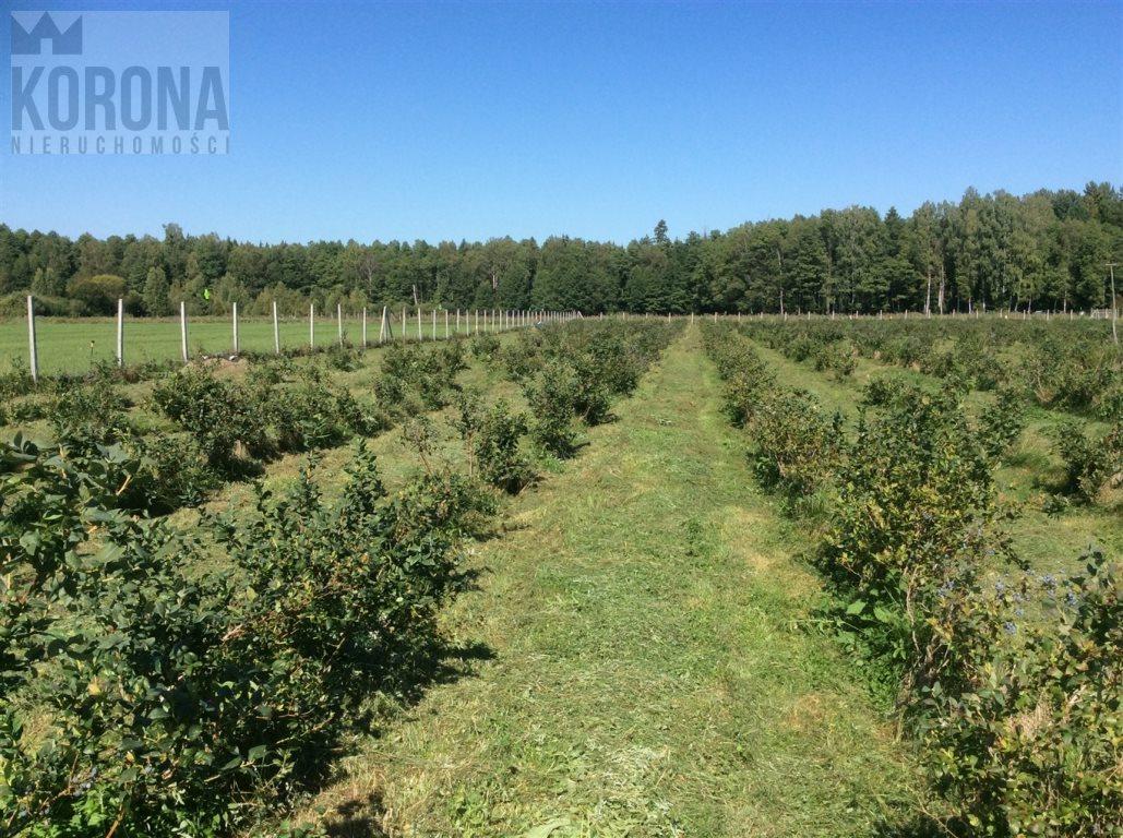 Działka rolna na sprzedaż Pasieki, Babia Góra  13300m2 Foto 1