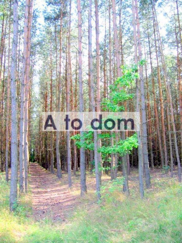 Działka leśna na sprzedaż Helenów  19300m2 Foto 1