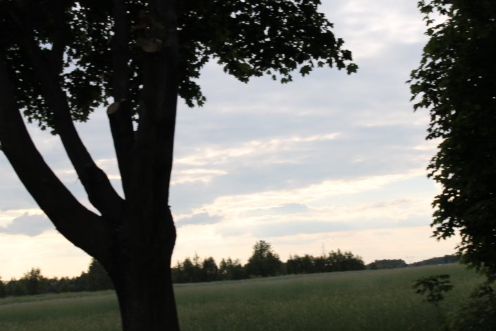 Działka rolna na sprzedaż Skotniki  17600m2 Foto 9