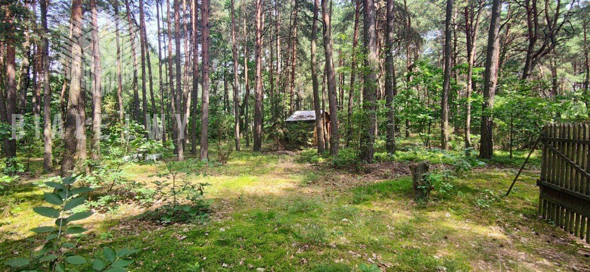 Działka leśna na sprzedaż Radachówka  1200m2 Foto 6