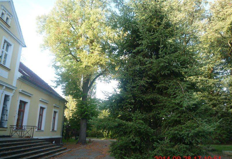Dom na sprzedaż Popowo Kościelne, 38  650m2 Foto 8
