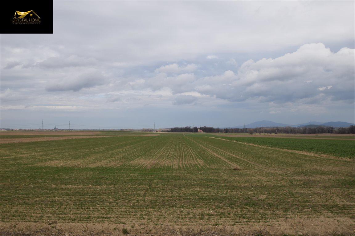 Działka rolna na sprzedaż Burkatów  32610m2 Foto 3