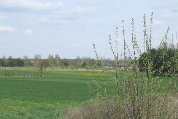 Działka budowlana na sprzedaż Cerekiew, Cerekiew  7832m2 Foto 12