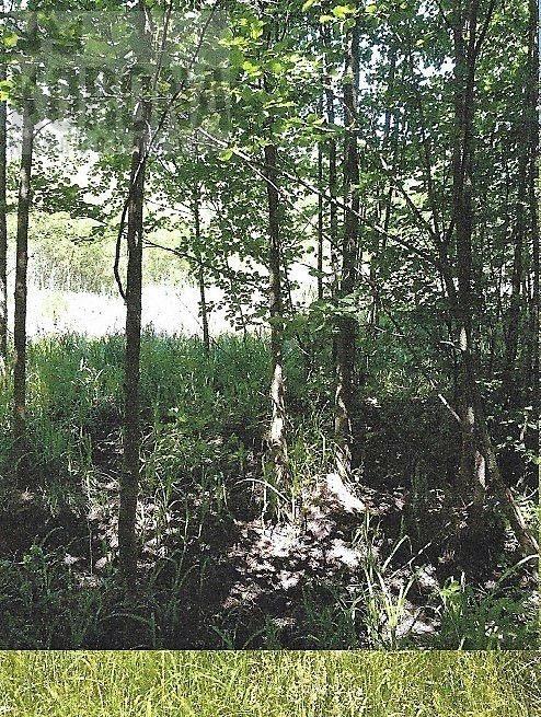 Działka leśna na sprzedaż Białystok, Dojlidy Górne  4322m2 Foto 4