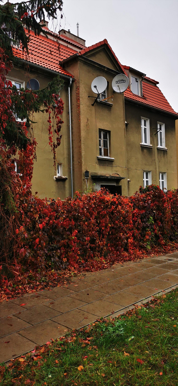 Dom na sprzedaż Poznań, Grunwald, Willa miejska na poznańskim Grunwaldzie, Willa miejska na poznańskim Grunwaldzie, Jarochowskiego 55  527m2 Foto 4