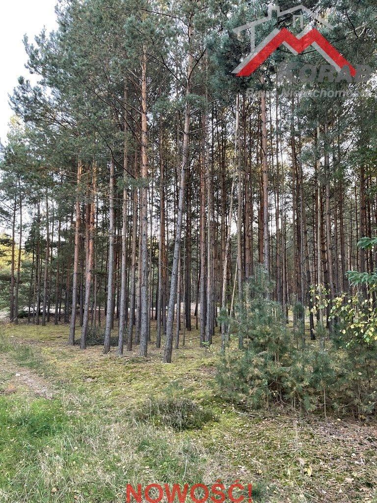 Działka leśna na sprzedaż Sowia Wola  3125m2 Foto 1