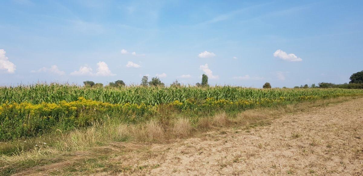Działka rolna na sprzedaż Czernica  9534m2 Foto 3