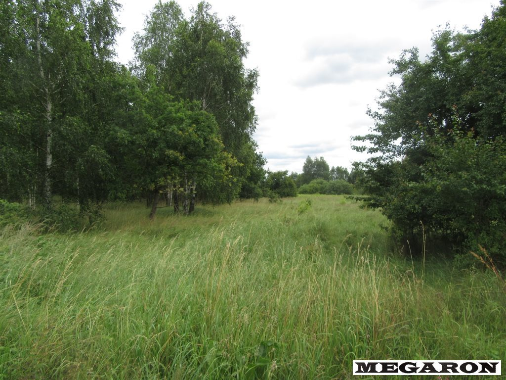 Działka leśna na sprzedaż Rzerzęczyce  25401m2 Foto 8