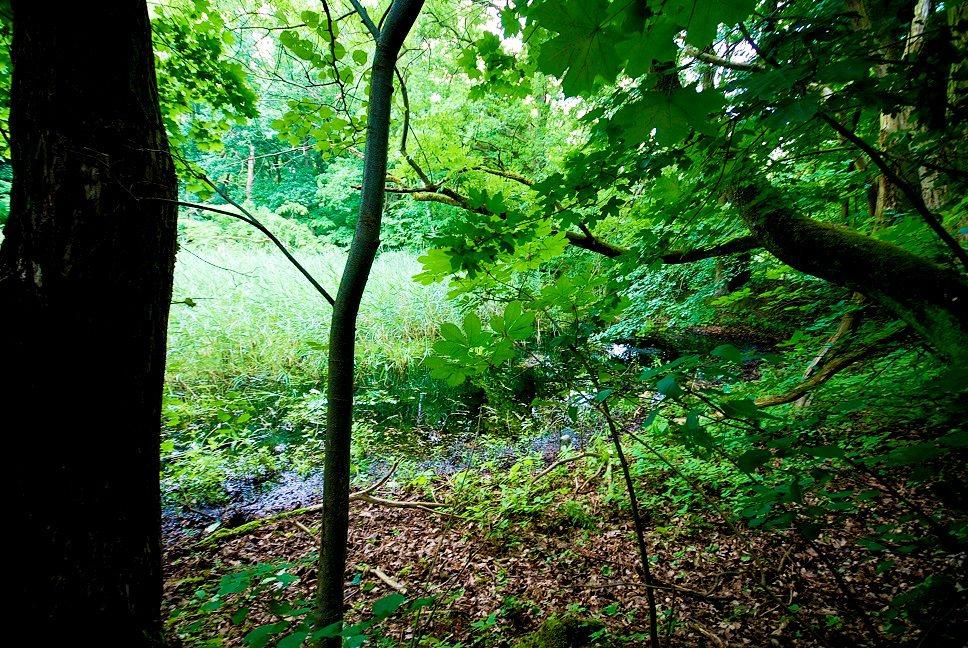 Działka leśna na sprzedaż Grodzanów  46000m2 Foto 6