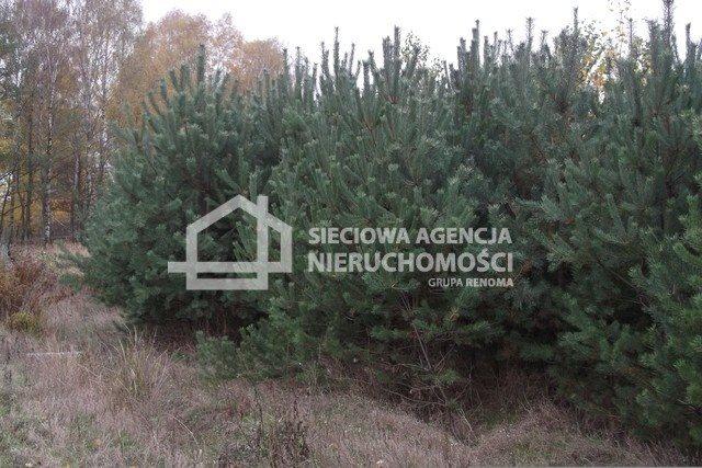 Działka leśna na sprzedaż Drozdowo  93200m2 Foto 6