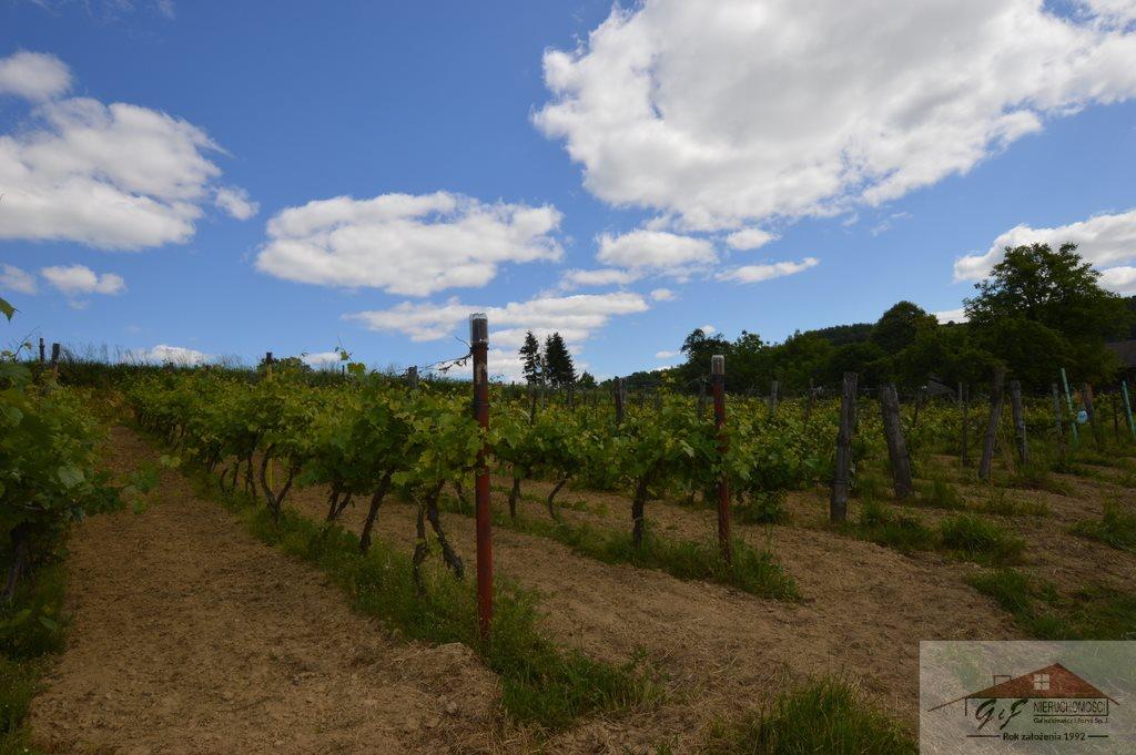 Działka rolna na sprzedaż Węgierka  11700m2 Foto 3