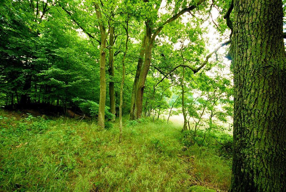 Działka leśna na sprzedaż Grodzanów  46000m2 Foto 11