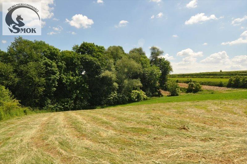 Działka rolna na sprzedaż Wilczkowice  15000m2 Foto 6