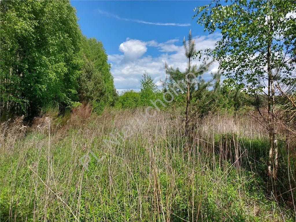 Działka rolna na sprzedaż Stare Groszki  12200m2 Foto 6