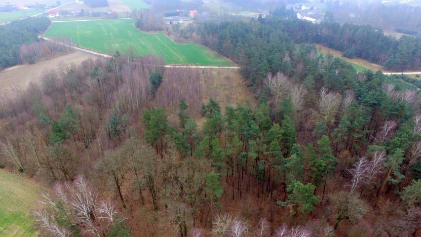 Działka leśna na sprzedaż Stary Cydzyn  8000m2 Foto 10