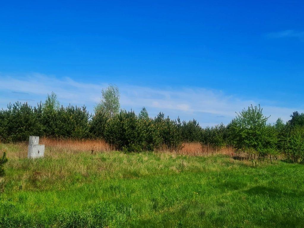 Działka rolna na sprzedaż Dębe, Dębe  4467m2 Foto 1
