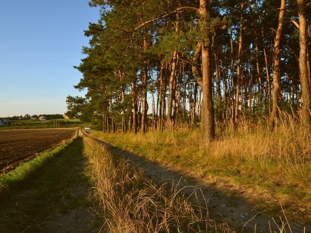 Działka leśna na sprzedaż Gogolin, Wygoda  25540m2 Foto 11