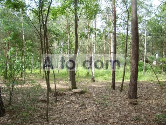 Działka leśna na sprzedaż Iły  4107m2 Foto 1