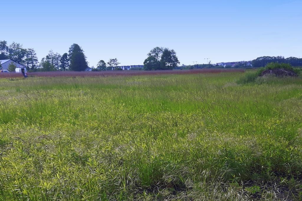 Działka siedliskowa na sprzedaż Iwiny  1750m2 Foto 1