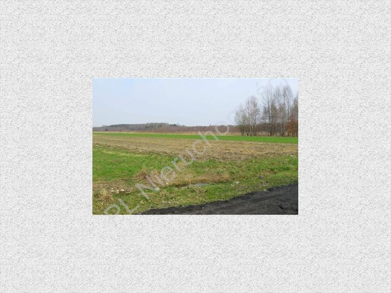 Działka rolna na sprzedaż Tyborów  4500m2 Foto 3
