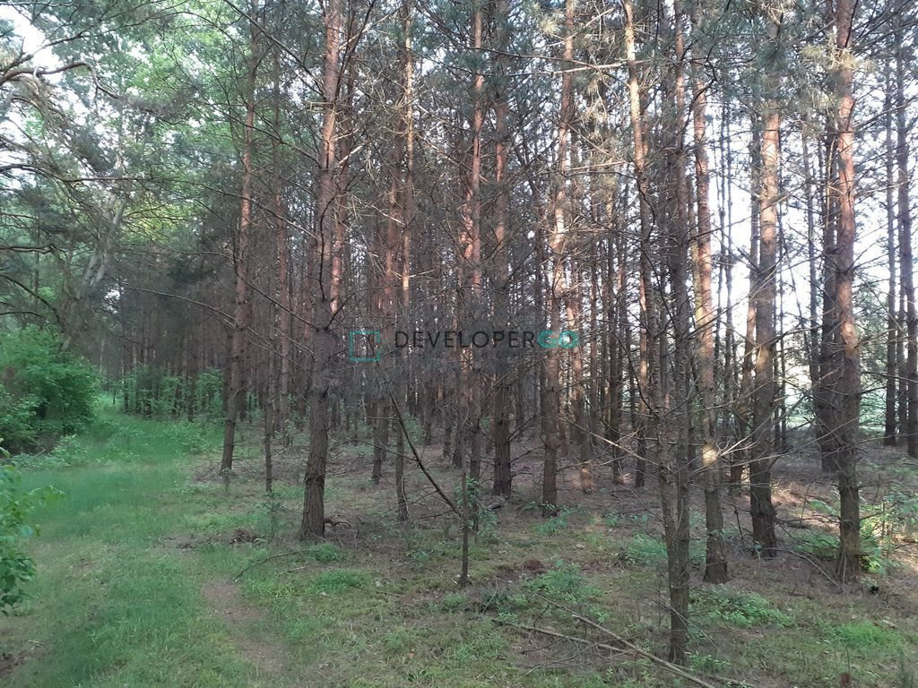 Działka leśna na sprzedaż Zakrzewek  17900m2 Foto 2